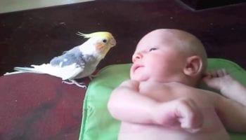 Попугайчик поет колыбельную для новорожденного малыша. Просто прелесть!