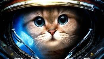 Шуточный гороскоп: какой вы котик по Знаку Зодиака