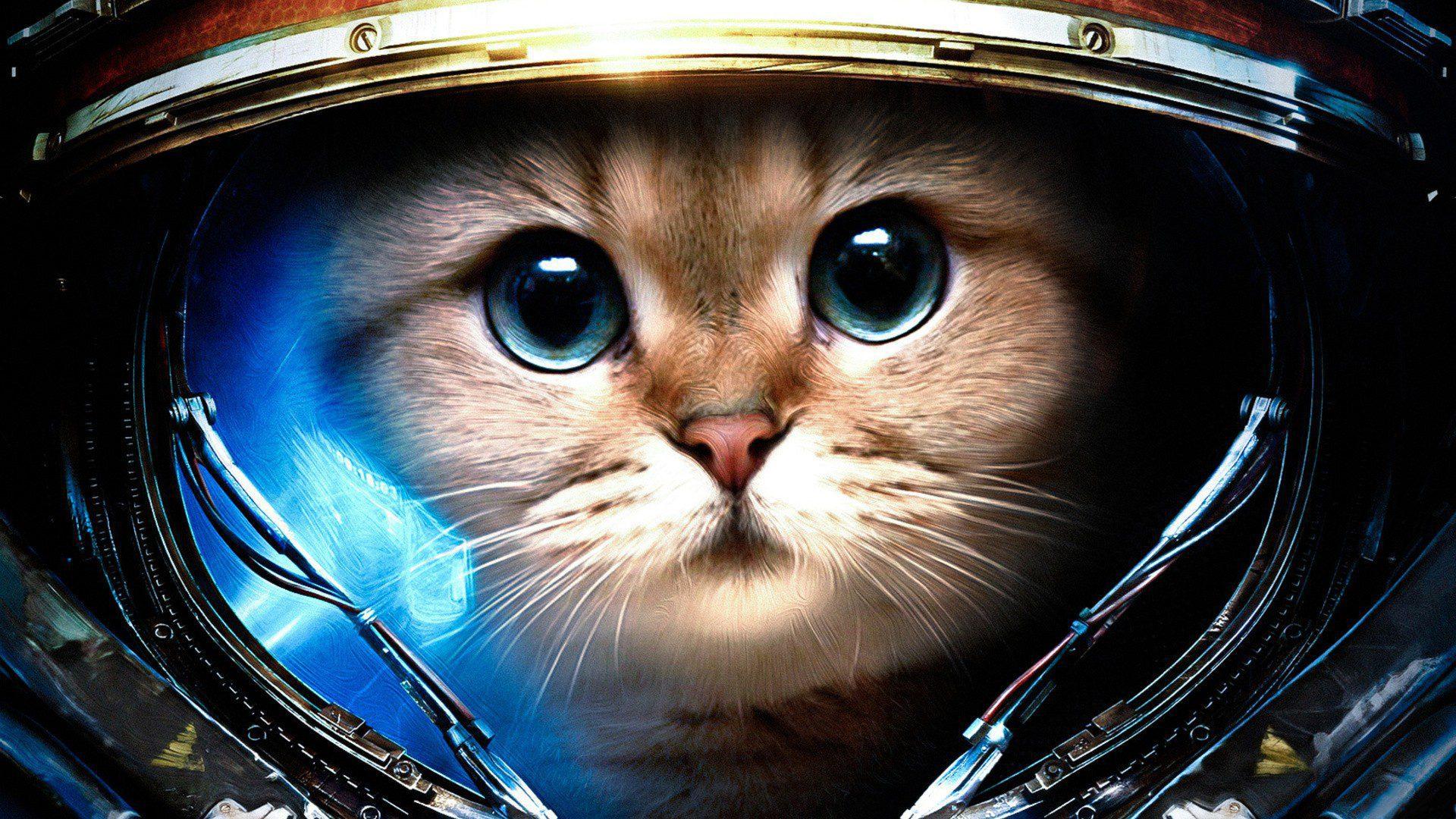 какой вы котик по Знаку Зодиака